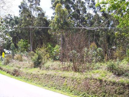 samboio esquina (5).jpg